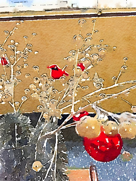 Photo: Christmas Cardinal Watercolor via #waterlogue app