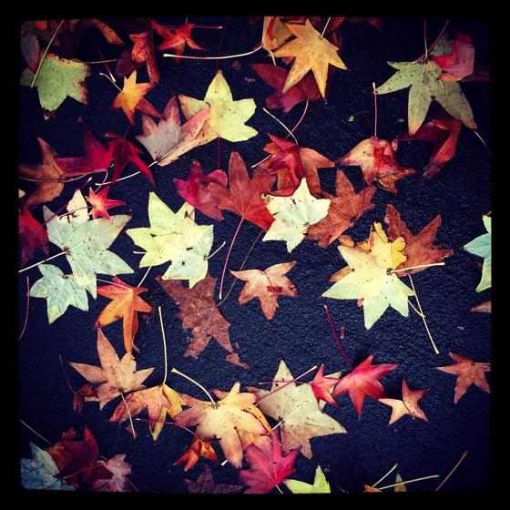 Photo: Fallen Leaves via #instagram