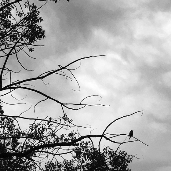 Photo: Bird and sky via #instagram