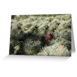 Fir tree cards sq