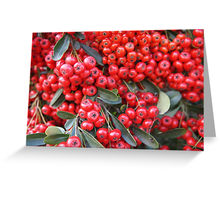 Pyracantha cards