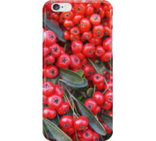 Pyracantha iphone