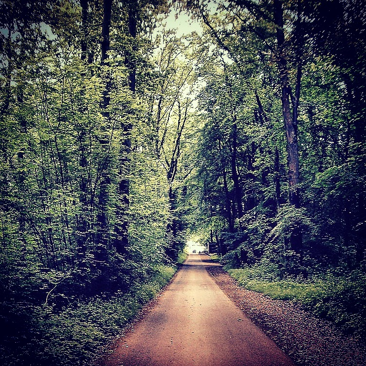 into-the-woods-instagram