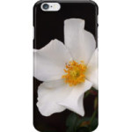 white-rose-iphone