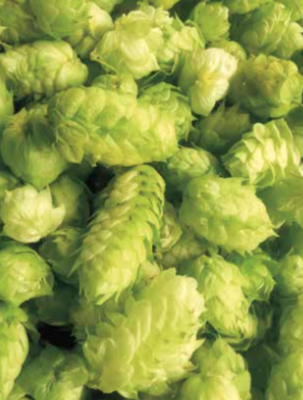 Noted: Learn to Grow Hops