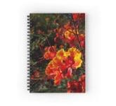 Mex bird notebook