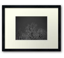 Trees sky print