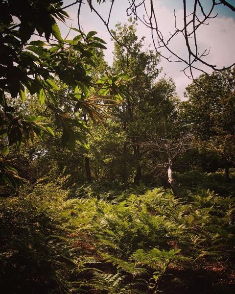 Ferns chestnuts