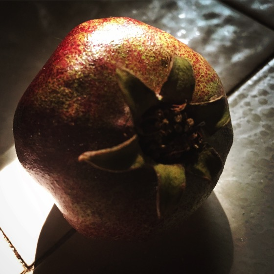 One tiny pomegranate from our young tree #pomegranate #tree #fruit #garden #grow #plants #nature #outdoors