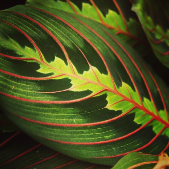 Beautiful Leaves #plants #leaves #garden #nature