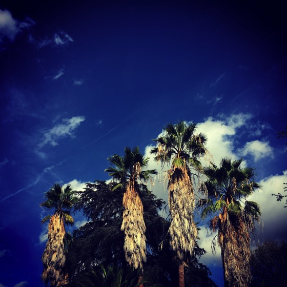 A Blustery Day in the San Fernando Valley #sky #nature #palmtrees #outdoors #sanfernandovalley #sfv