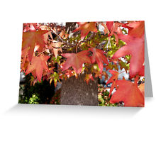 fall-leaves-3-cards