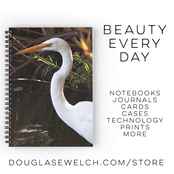 Shop for this Egret Notebook and much more exclusively from my photos