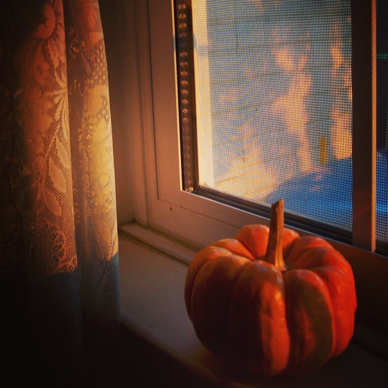 Harvest Time #harvest #thanksgiving #fall #autumn #gourd #window #sunset #pumpkin