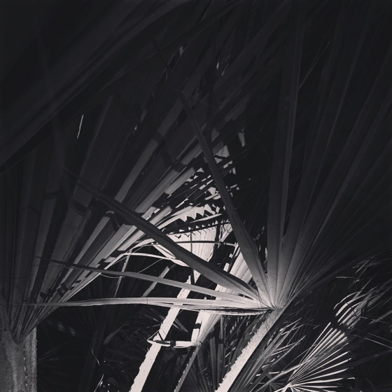 Palms at Night #palmtree #palm #tree #night #bw #blackandwhitephotography #blackandwhite #garden #nature