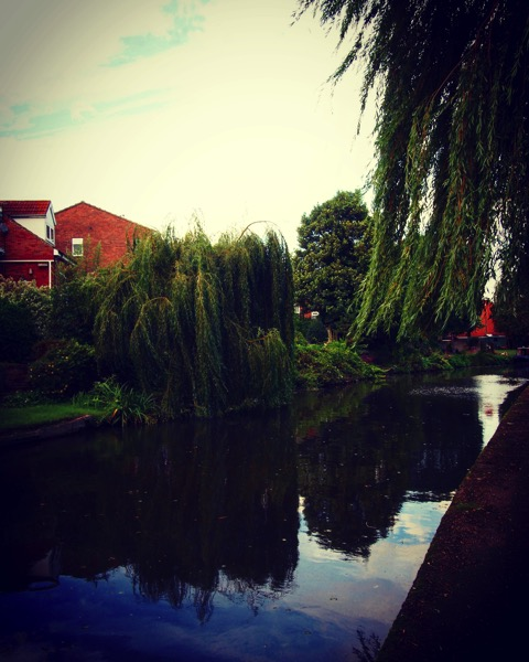 Along the canal in Nottingham #canal #Nottingham #uk #travel #transportation #water #willow