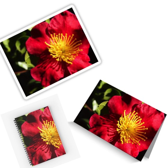 Camellia Blossom Journals, Notebooks, Stickers, Cards and More!