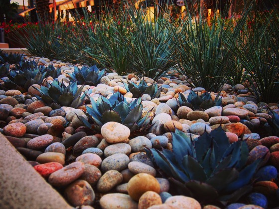Succulent Planting at The Gardens on El Paseo [Photo]