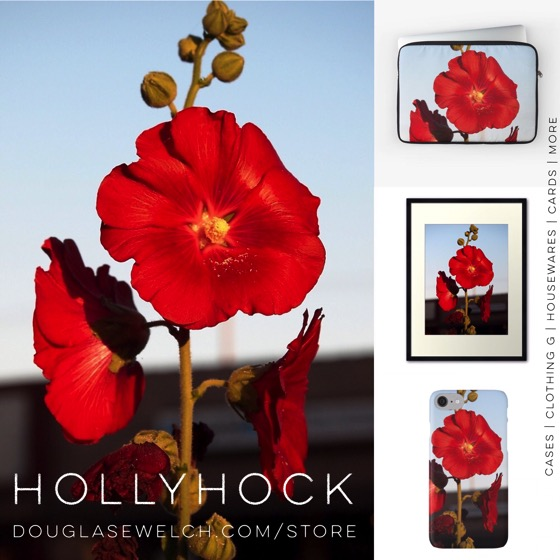 Get these Hollyhock cases, prints, laptop sleeves and much more from DouglasEWelch.com/store #hollyhock #flowers #garden #nature #red #technology #cards #clothing #home #housewares #gift #arts #crafts