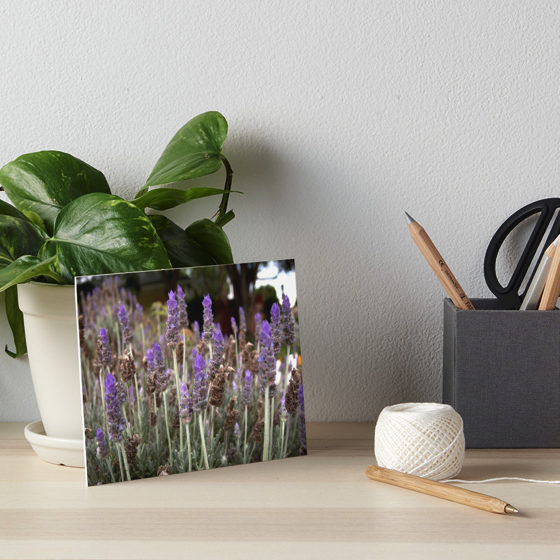 Dress up your home, office or dorm room with these lavender field gallery boards and much more!