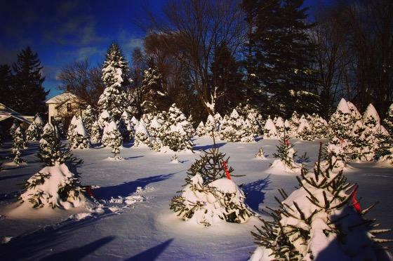 One Winter in Ohio [Photo]