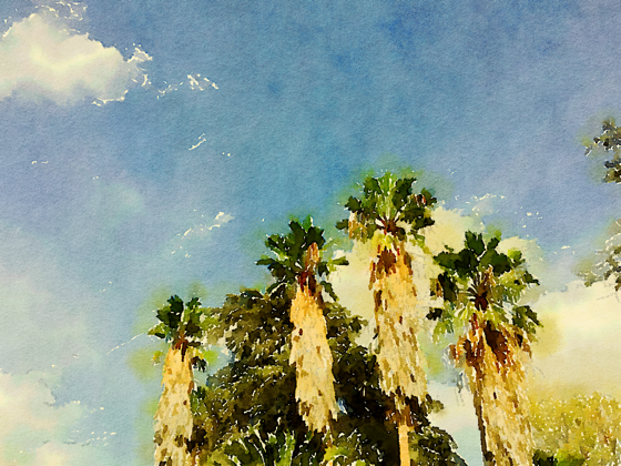 Palms and Sky, Palm Desert, California [Watercolor]