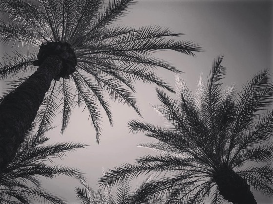 Palms in Black and White [Photo]