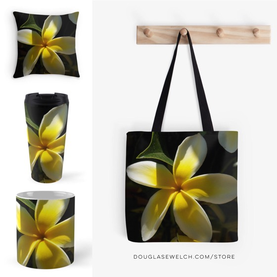 Get these Plumeria Flowers Housewares and Much More!