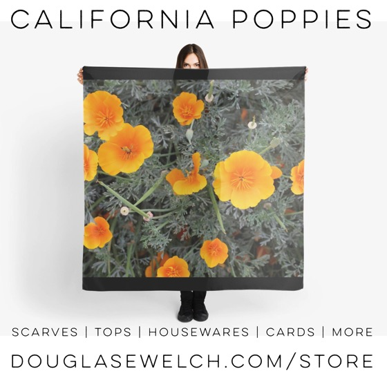 Get these California Poppies and more on scarves, tops, totes and much more. #scarf #scarves #clothing #flowers #poppy #california #nature #garden #outdoors #housewares #cards #bags #arts #crafts