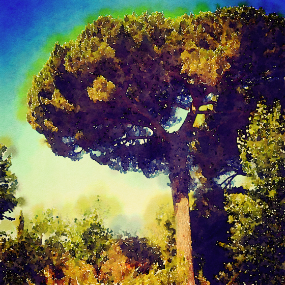 Stone Pine, Parco dell'Etna, Sicily, Italy