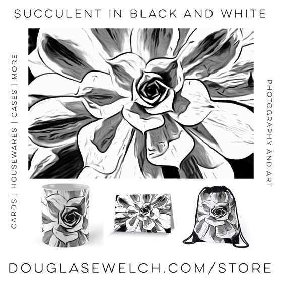 Succulent in Black and White Cards, Housewares, Bags and More from Douglas E. Welch