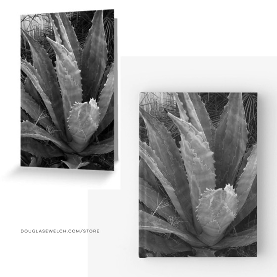 Write and Share with these Agave Cards and Journals…and Much More!