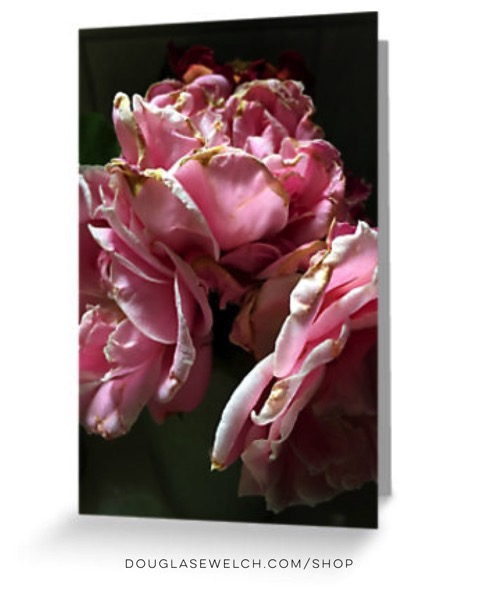 Everything Fades Greeting Cards and Much More!