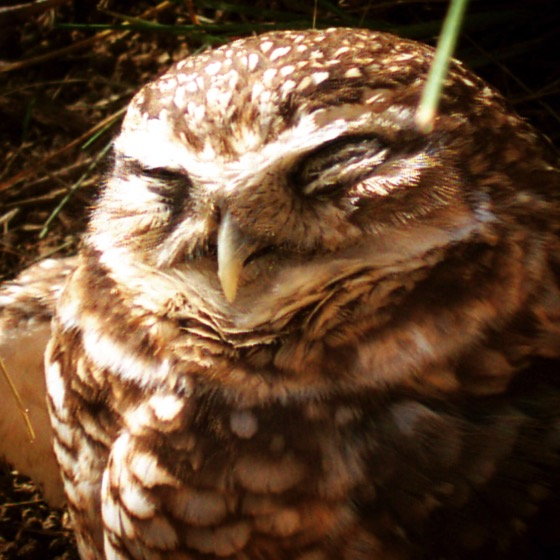 My Word with Douglas E Welch » Happy Owl? [Photo]