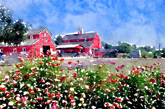 On the farm… Watercolor