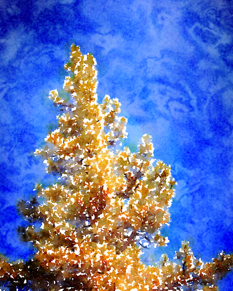 Pine Tree and Sky [Watercolor]