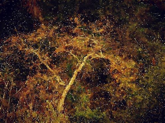 Sycamore in the Arroyo Seco [Watercolor]