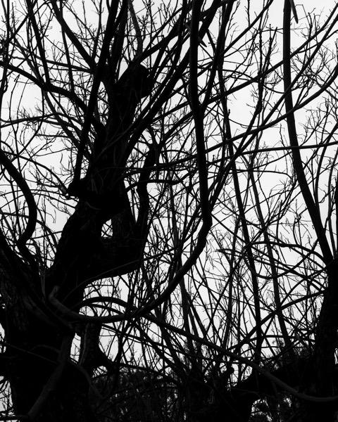 Winter Tree Abstract