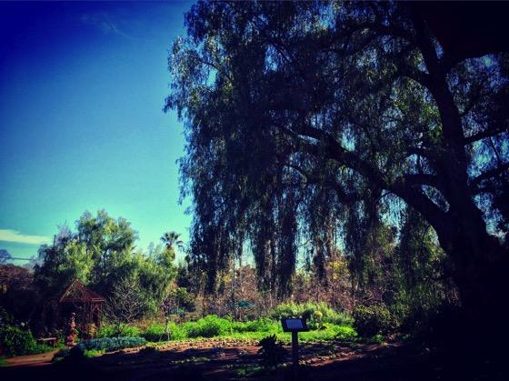 Arlington Garden Scene