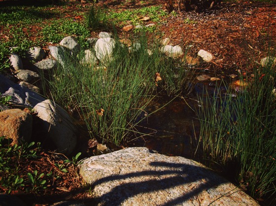 By the vernal pond