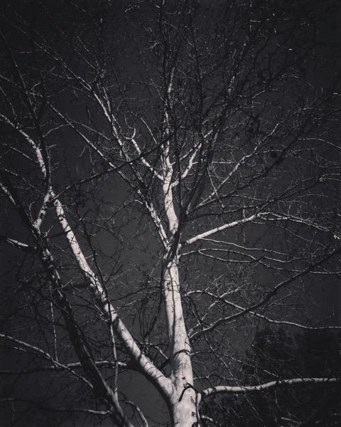 Winter Tree 2