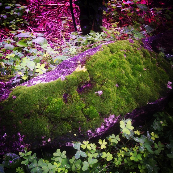 Mossy Rock in the Garden