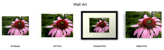 A bee gathering on purple coneflower - Totes, Mugs, Smartphone Cases, Tops and Much More!
