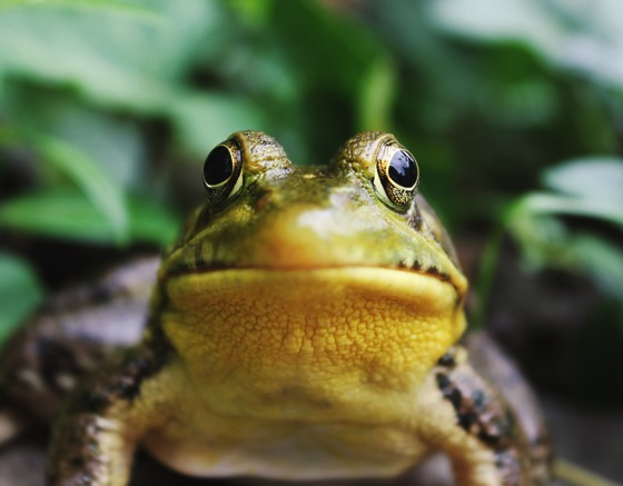 Frog Photo by Jack Hamilton on Unsplash