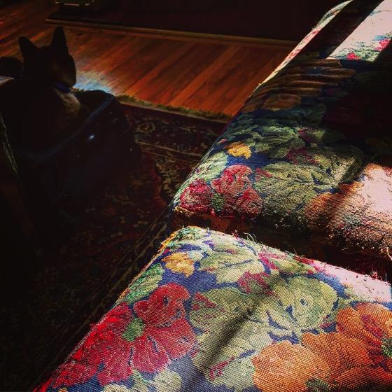 Sofa, Sun and Kitty