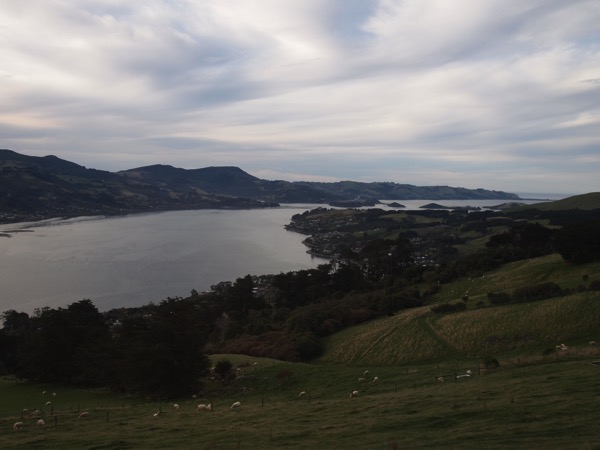 Otago Harbor Dunedin New Zealand  10