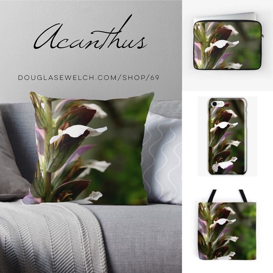 Get these Acanthus Pillows, Totes, Smartphone Cases and More!