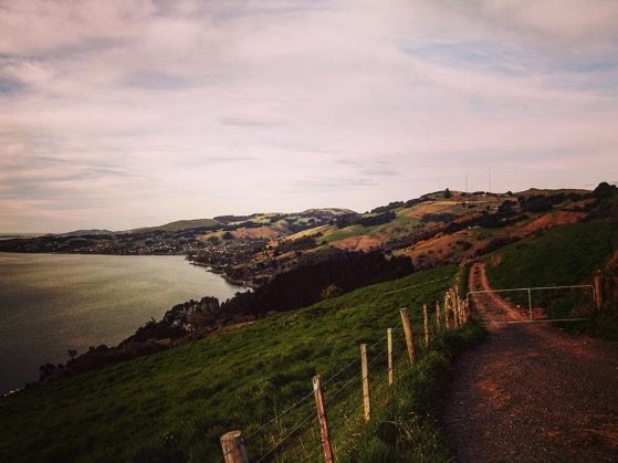 Above Otago Harbor via Instagram