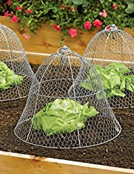 04 Garden Cloches | Douglas E. Welch Holiday Gift Guide 2017
