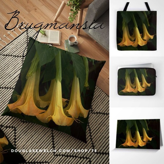 Get these Brugmansia Pillows, Totes, Cards and More!
